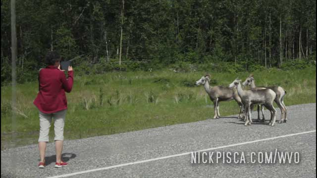 Animals on the Alaska Highway!