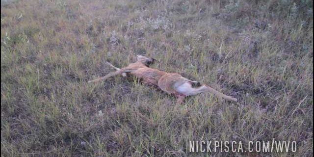 Hit a Deer West of Moose Jaw