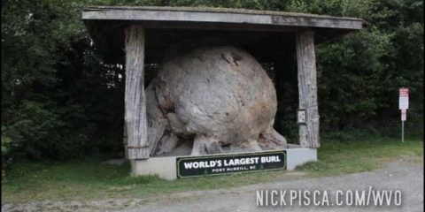 World's Largest Burl in Port McNeill